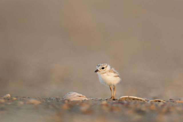 new beginnings poem - Sand