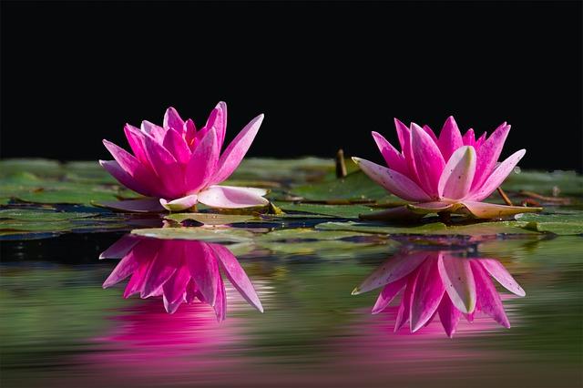 flower poem - Waterlilies