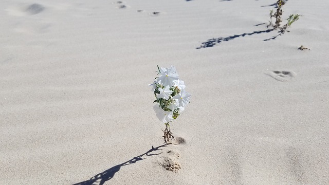 growth poem - Rubble